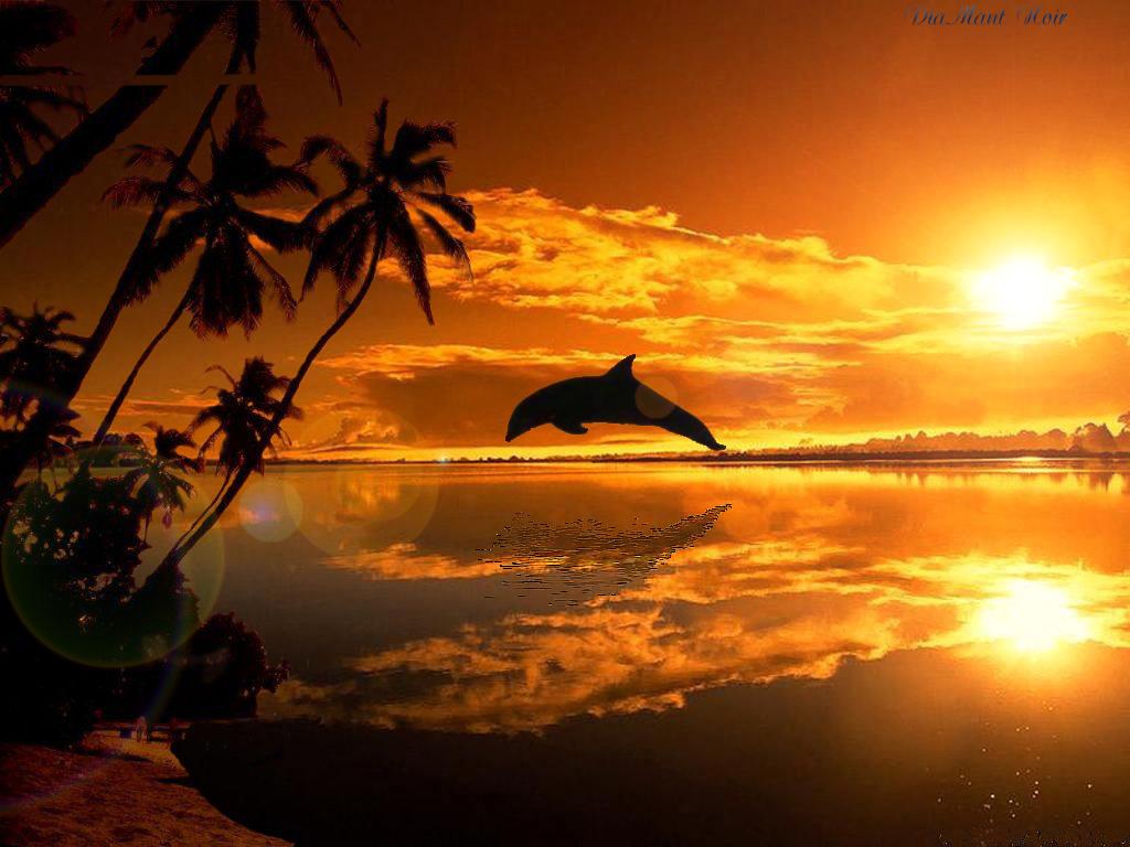 Couchers de soleil - Palpitations le soir au coucher ...